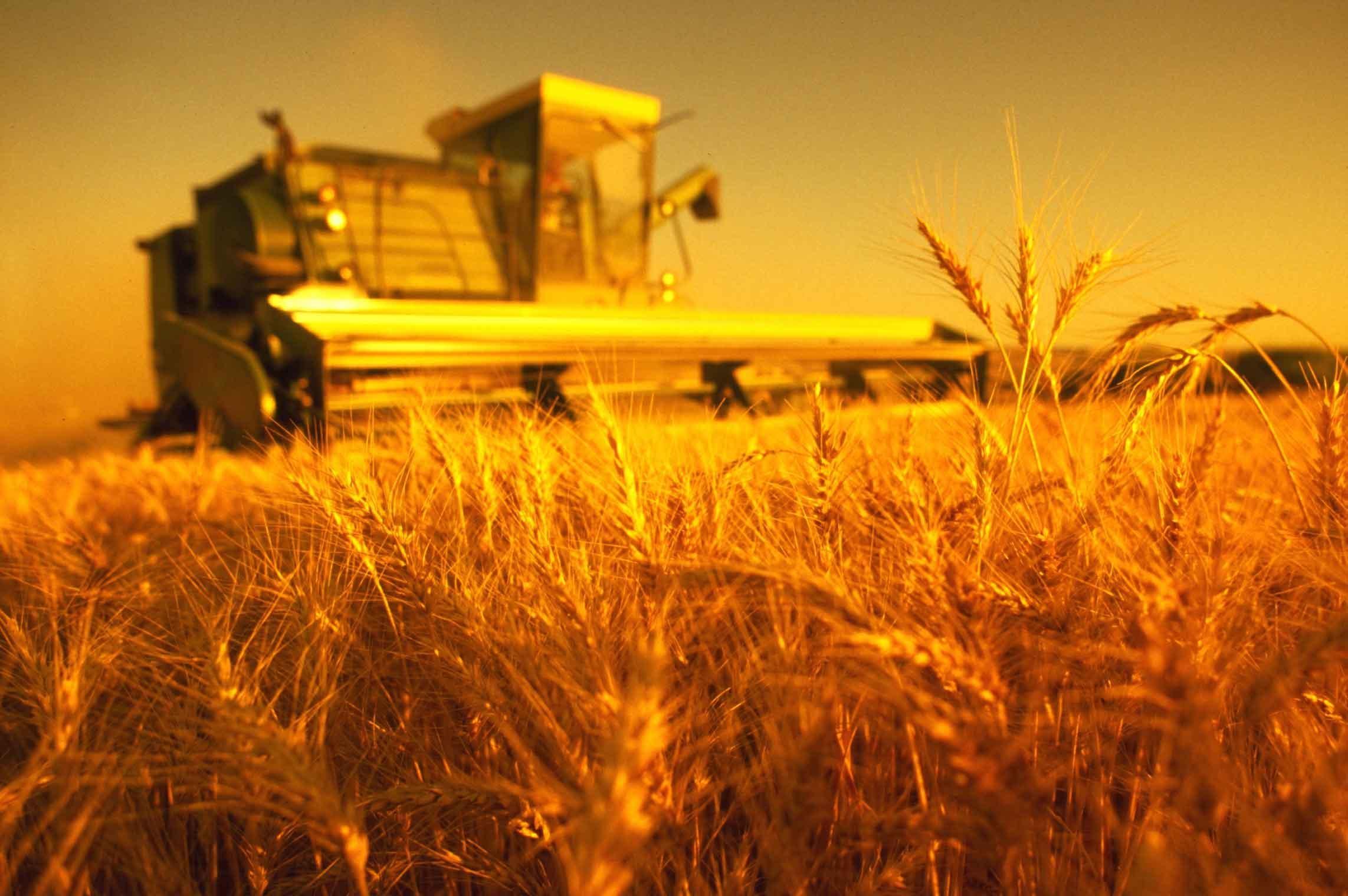 Купить землю для сельского хозяйства в греции